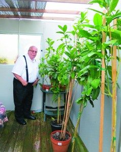 Mr. Schiffer with his plants, inside his sukkah.