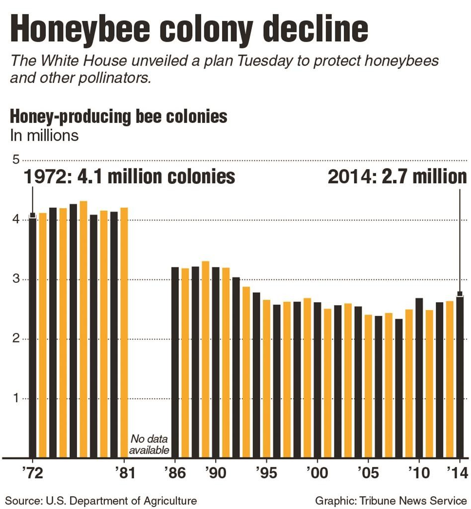 the decline of the bee We owe a lot to wild bees the buzzing insects are crucial pollinators for many agricultural crops, from pumpkins and squashes to peaches and apples it turns out, however, that wild bee.