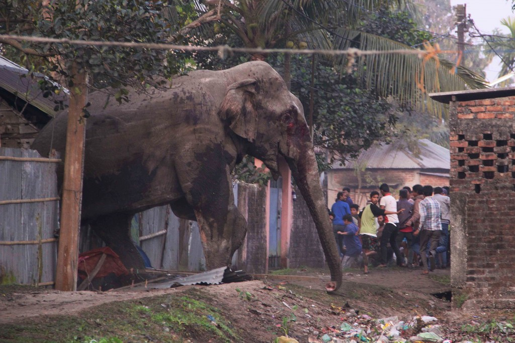 Image result for Jew elephants