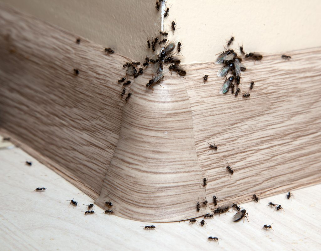 Your house is a gigantic bug habitat and there 39 s nothing for Ant infestation in kitchen cabinets