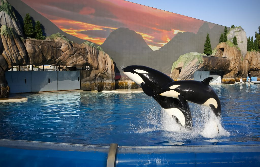 Seaworld Entertainment Inc (NYSE:SEAS) Move as Institutional Investors' Sentiment Improved