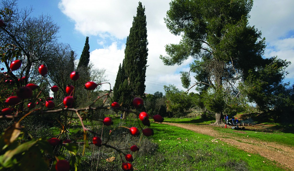 The Yerushalayim Park consists of open green areas in the spaces surroundingthe capital. All the politicians have gone green — or say they have. (Flash 90)
