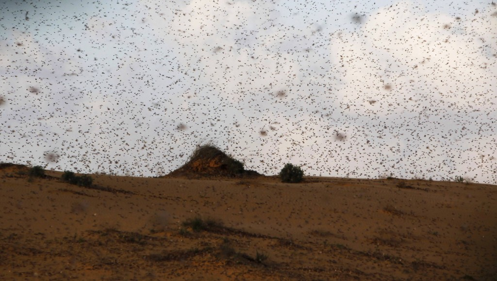 A swarm of locusts darkens the sky near Kmehin, in the Negev, Wednesday. (REUTERS)
