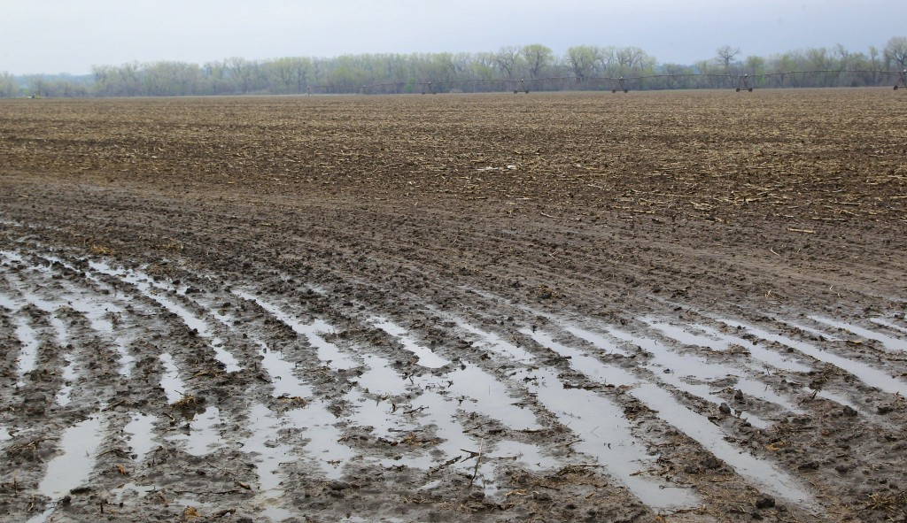 Rain water puddles in a field near Waterloo, Neb. Thursday. According to the weekly drought report released Thursday, a wet spring continues to soak the soil across much of the Midwest, causing the prolonged drought to slowly retreat westward. (AP Photo/Nati Harnik)