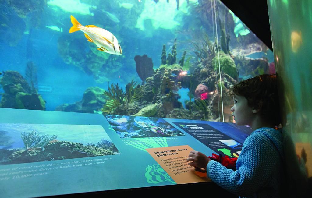 Sandy Damaged Coney Island Aquarium
