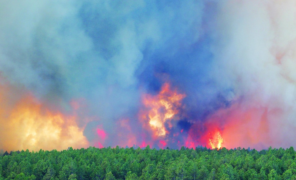 Fire crowns in the trees during a wildfire in the Black Forest area north of Colorado Springs, Colo., on Wednesday. The number of houses destroyed by a wildfire near Colorado Springs could grow to around 100, and authorities fear it's possible that some people who stayed behind might have died. (AP Photo/Ed Andrieski)