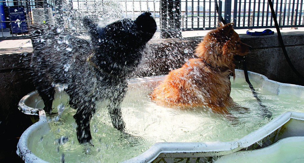 Dogs splash in a canine wading pool in Hudson River Park during the heat wave Tuesday.