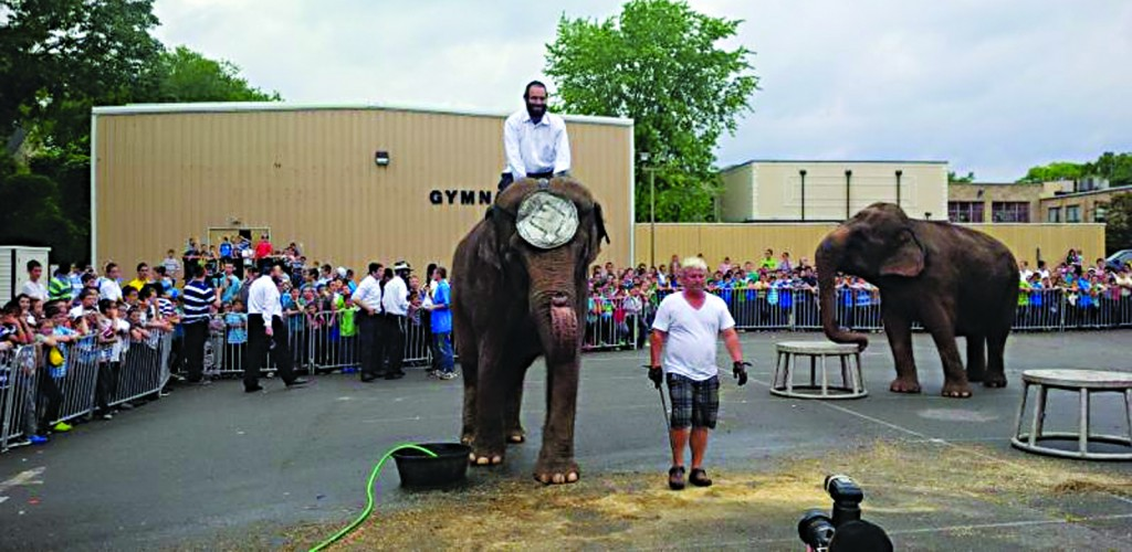 Elephants perform at Camp Kanfei Yonah in Lakewood on Thursday. (TheLakewoodScoop.com)