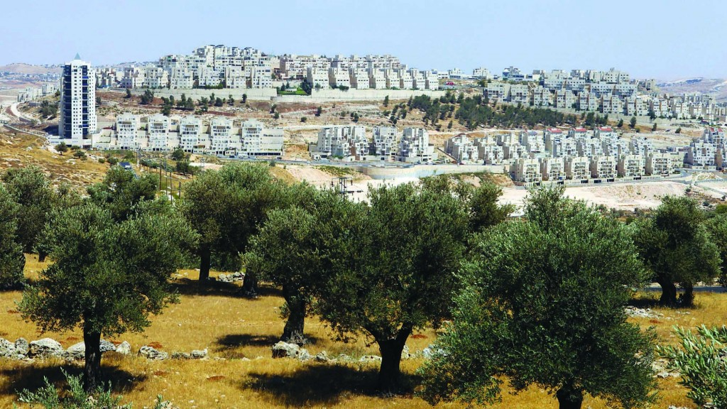A view of olive trees in the foreground, with the Har Homa neighborhood visible in the background. (Abir Sultan/Flash 90)
