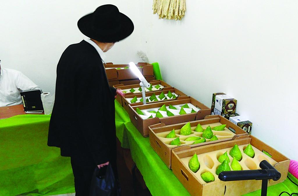 Sukkos preparations in Yerushalayim.(Kuvien Images)