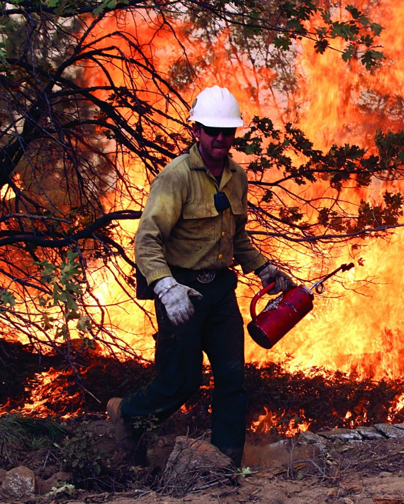 A member of the BLM Silver State Hotshot crew using a drip torch to set back fires on the southern flank of the Rim Fire in California. (AP Photo/U.S. Forest Service)