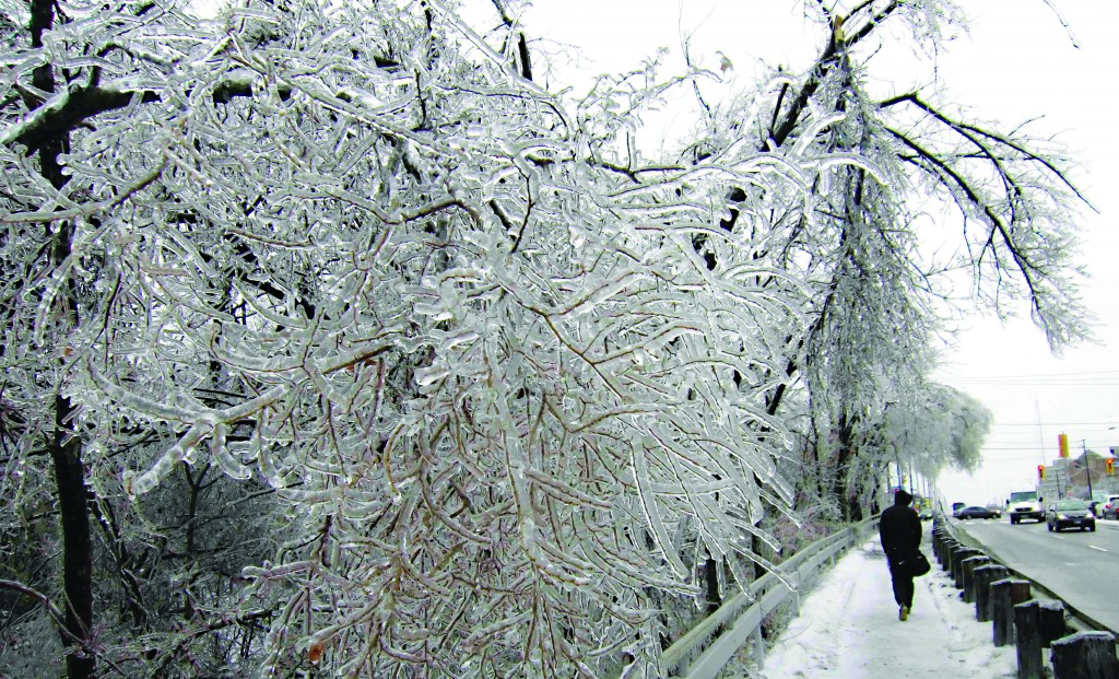 A man walks past ice-encrusted trees following an ice storm in Toronto, Monday. A storm system brought freezing rain across much of Eastern Canada and parts of the United States, cutting power to hundreds of thousands of people and wreaking havoc on travel. (REUTERS/Gary Hershorn)