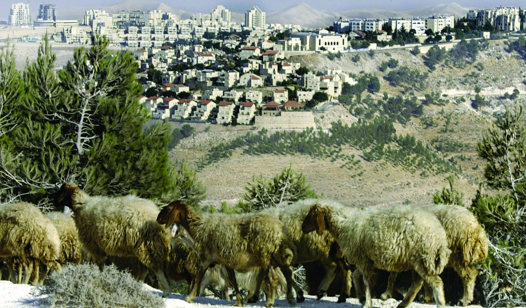 Sheep grazing in front of Maaleh Adumim, seen in the background, the largest Jewish community over the Green Line. (AP Photo/Baz Ratner)