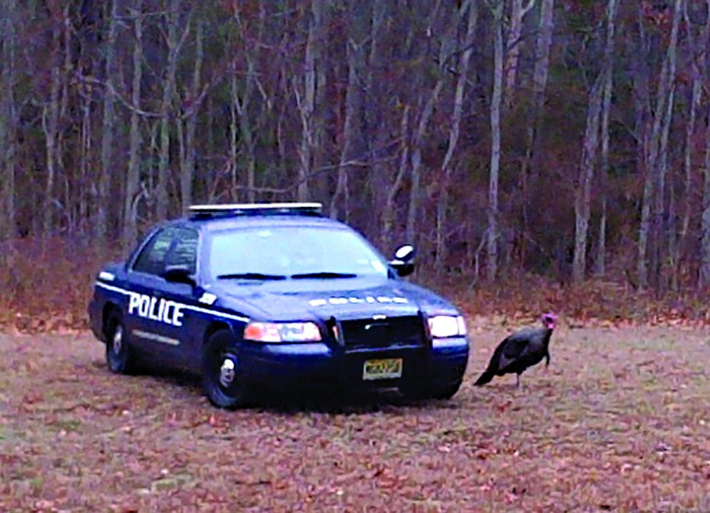 A wild turkey ran loose through Lakewood Monday, causing traffic jams in the area of Route 70. It even approached cars to peck at the doors. (TheLakewoodScoop.com)