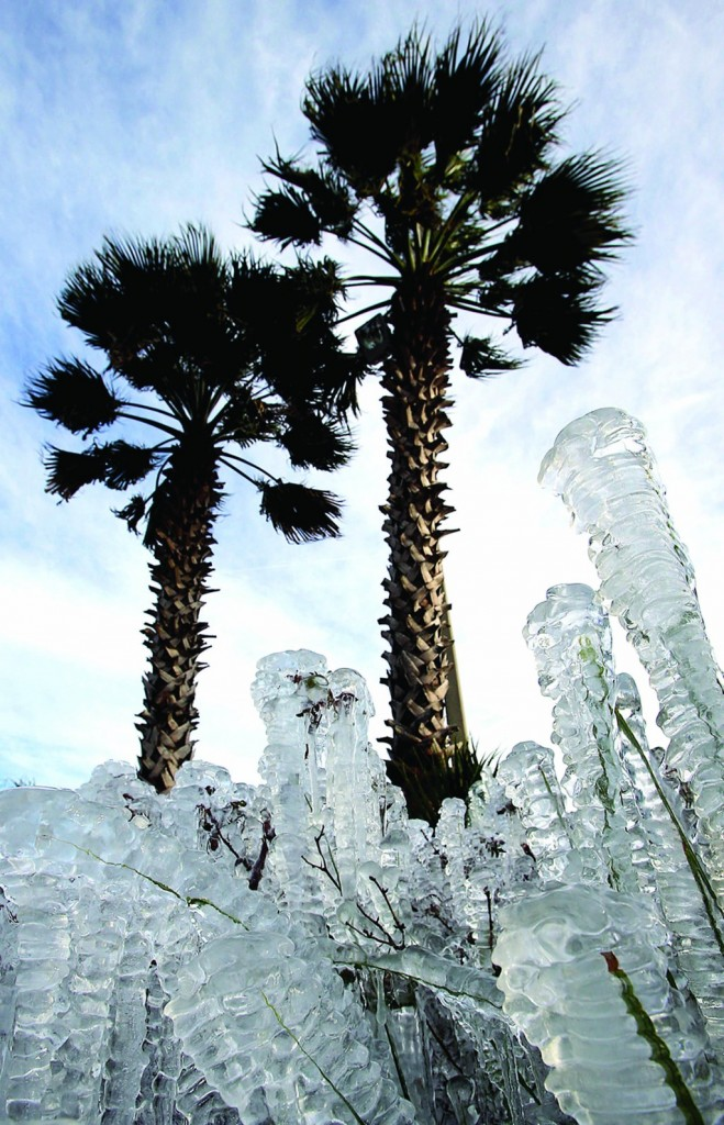 Panama City Beach, Florida  Ice-covered plants are seen in Panama City Beach, Fla. Sprinklers left on overnight created the icy cover.