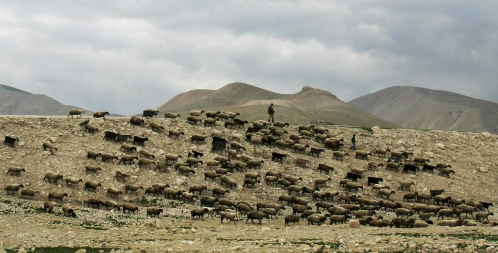 Shepherds walk with their flock of sheep in the Jordan Valley.(AP Photo/Sebastian Scheiner)