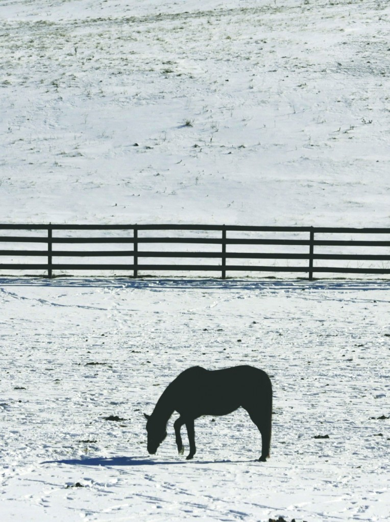 A horse walks Thursday in a snow-covered field in Chatham, N.Y., where temperatures are well below freezing. (AP Photo)