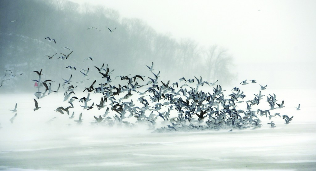 A flock of gulls flies against frigid winds over the ice in Irondequoit, N.Y..