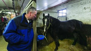 ...and spends the night in a comfortable stall at New York's Clinton Stables. (AP Photos)