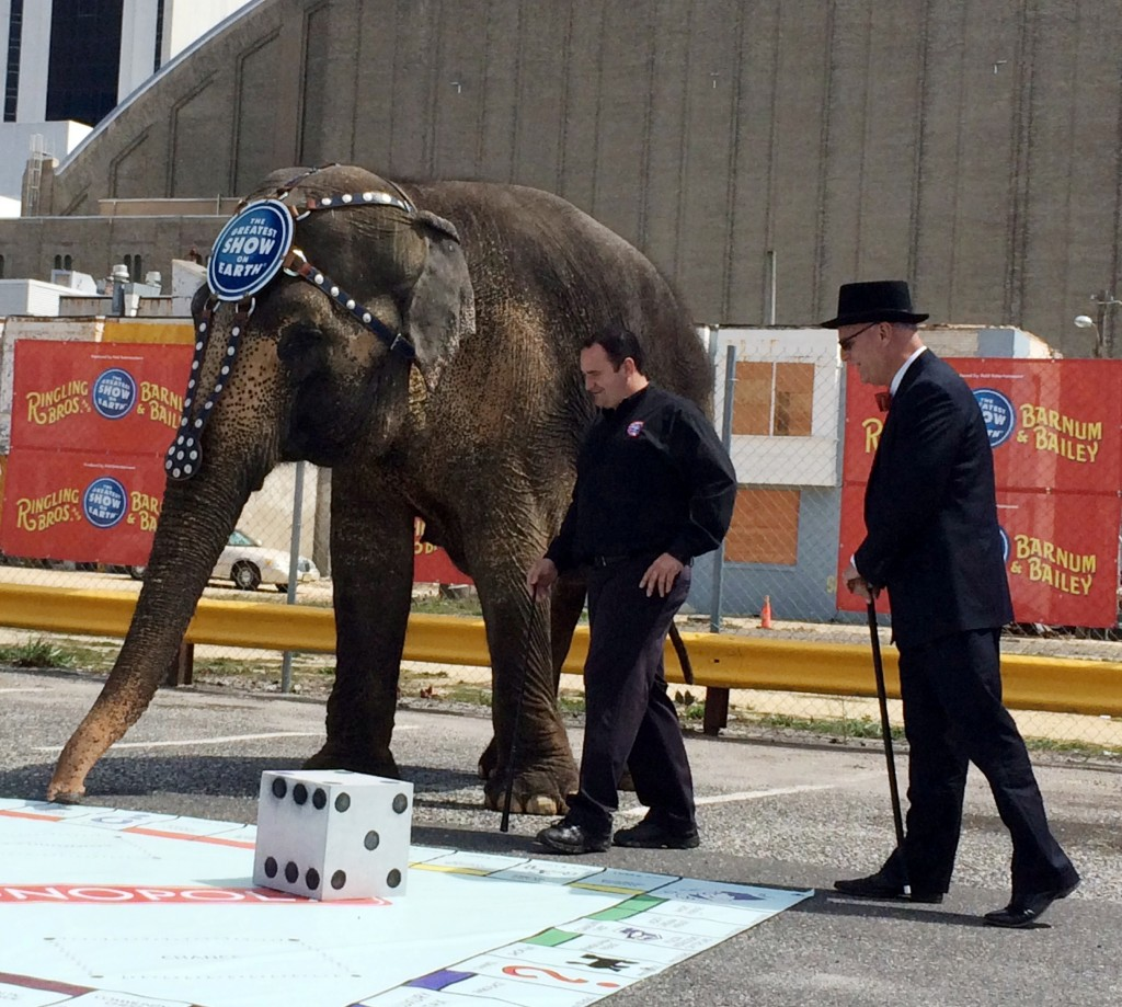 Duchess the elephant plays Monopoly on an oversized board with Atlantic City Mayor Don Guardian, far right, Wednesday. (AP Photo)