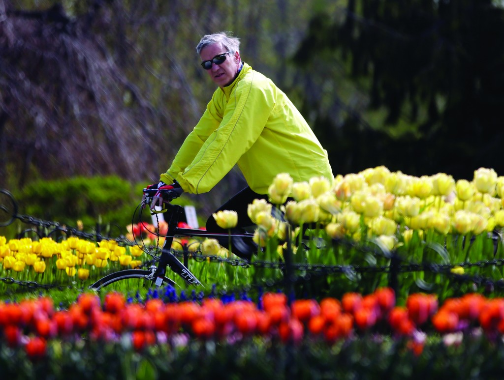 Celebrating Spring: John Ray of Saratoga Springs, N.Y., on Thursday takes in the tulips while riding his bike in Albany. (AP Photo/Mike Groll)