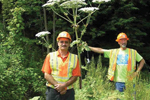 State DEC employees stands near a giant hogweed plant deemed toxic. (New York state Department of Environmental Conservation)