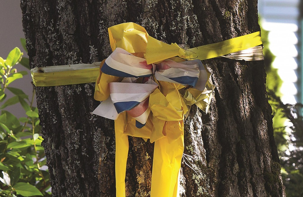 A yellow ribbon is seen tied to a tree outside the family home of freelance journalist James Foley. (AP Photo/Jim Cole)