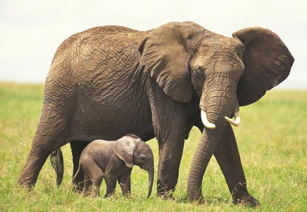 On Tuesday New York, which the Wildlife Conservation Society says is the nation's No. 1 importer of ivory, restricted the sale of ivory or rhino horn unless they are antiques or used for educational or scientific purposes. (Twitter/Gov. Cuomo)