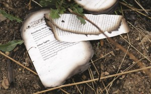 A burned book from the Malaysia Airlines Flight 17 plane is seen near village of Hrabove, eastern Ukraine, Tuesday. (AP Photo/Sergei Grits)