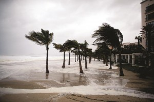 Winds blow palm trees on the beach in Los Cabos, Mexico as Hurricane Odile approached.  (AP Photo/Victor R. Caivano)