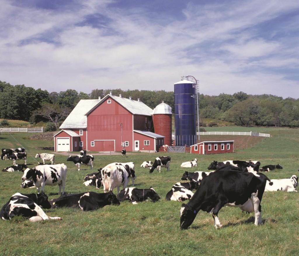 The Hallaway Dairy Farm in Delhi, N.Y.  (USDA)