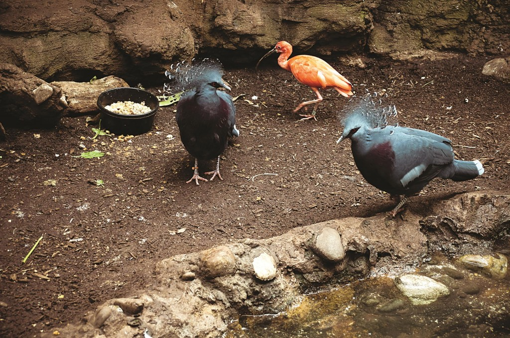 Exotic birds stroll the grounds at Central Park.