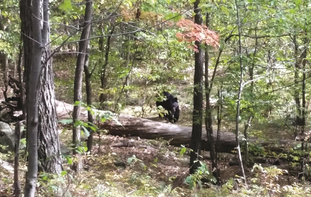 A bear lumbers toward Darsh Patel in New Jersey's Apshawa Preserve. Patel was mauled to death by the bear shortly after the photo was taken. (AP Photo/ West Milford Police Department)