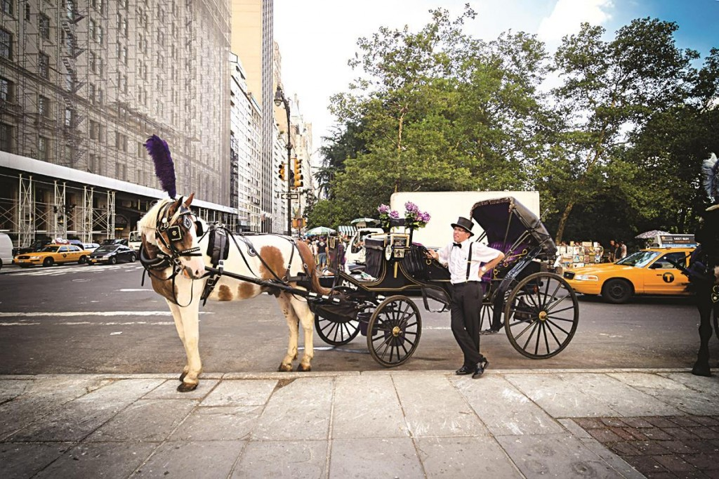 A driver waits with his carriage horse in Central Park.
