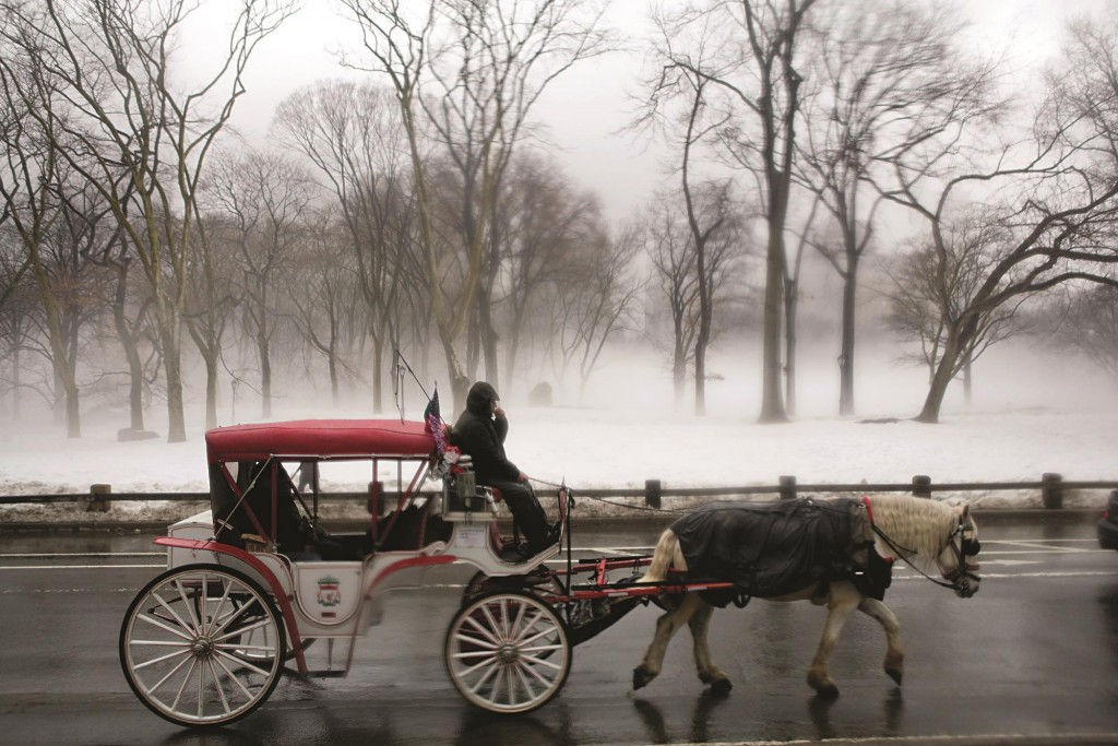 A horse carriage carrying tourists ambles down a Central Park road.