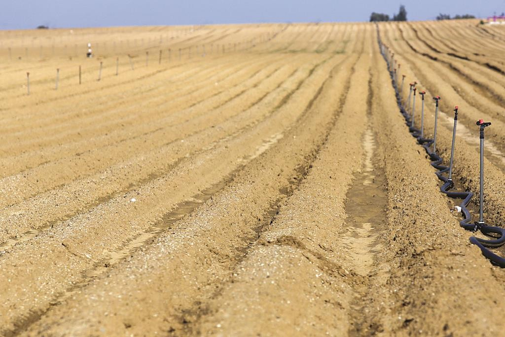 Agricultural fields in southern Israel near Ashkelon.  (Nati Shohat/Flash90)