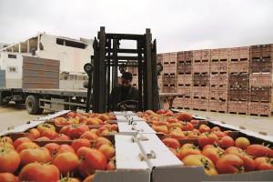 Produce from Gaza that was transported across the border into Israel, Thursday. (REUTERS/Ibraheem Abu Mustafa - IDF Photo)