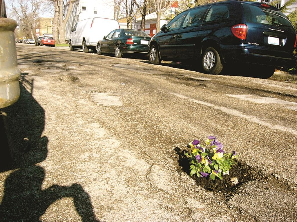 Pansies are planted in a pothole to draw attention to a road danger.