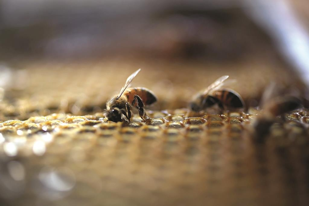 Honeybees are seen at the J & P Apiary and Gentzel's Bees, Honey and Pollination Company on Tuesday in Homestead, Florida. (Joe Raedle/Getty Images)