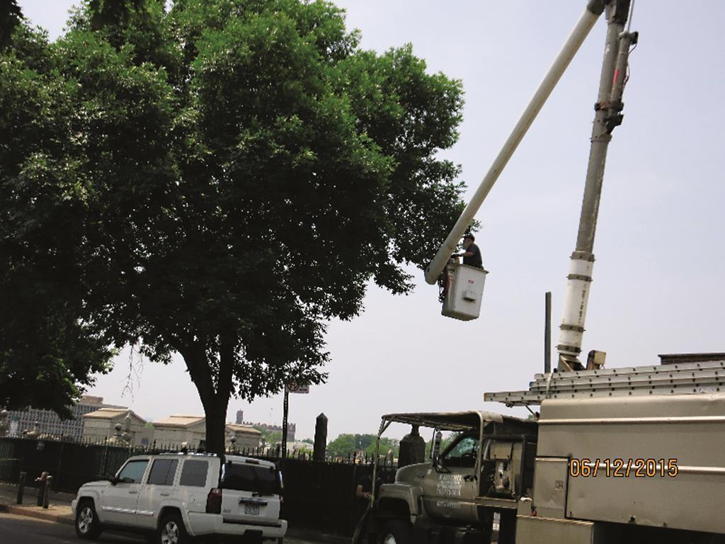 Ahron Gitchel pruning trees for Vaad Mishmeres Kehunah.