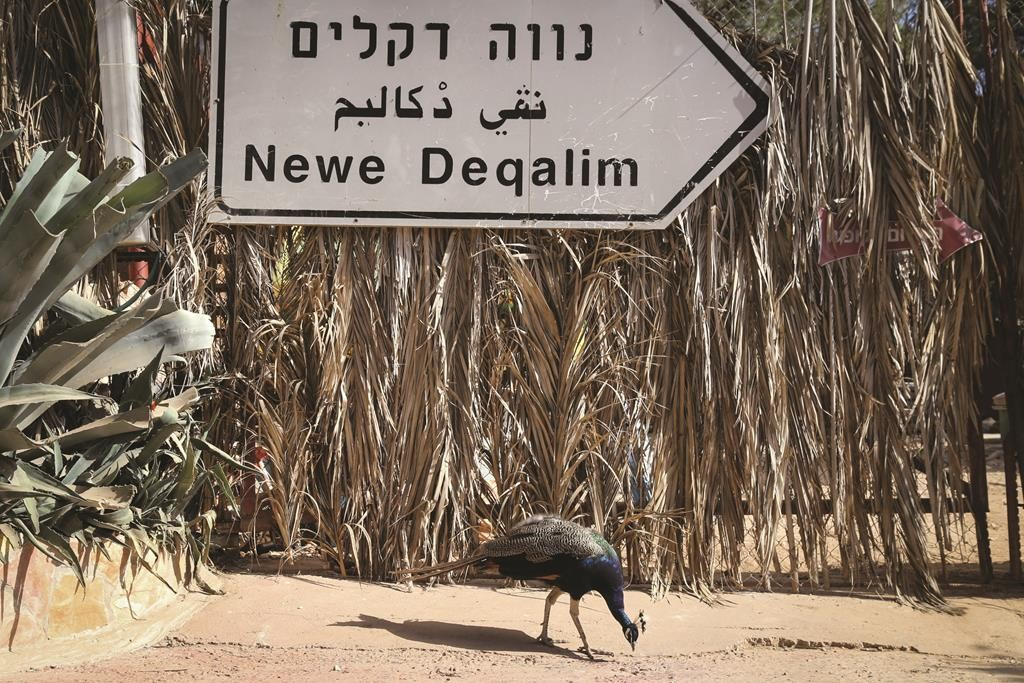 The original road sign to the Neve Dekalim community in the Jewish bloc of the Gaza Strip, known as Gush Katif, evacuated in 2005, still hanging on a fence made of palm trees (dekalim in Hebrew) at the Deer Land Farm in Gush Etzion, September 22, 2014. (Gershon Elison/Flash90)