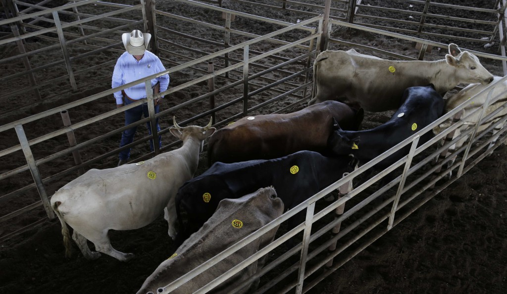 Texas and Southwestern Cattle Raisers Association special ranger Doug Hutchison makes a visit to the Giddings Livestock Commission. Hutchison, one of 30 Special Rangers with the Texas and Southwestern Cattle Raisers Association, photographs suspected stolen livestock, accesses the association's databases of livestock brands and reports of missing animals and consults with sheriff's offices. (AP Photo/Eric Gay)