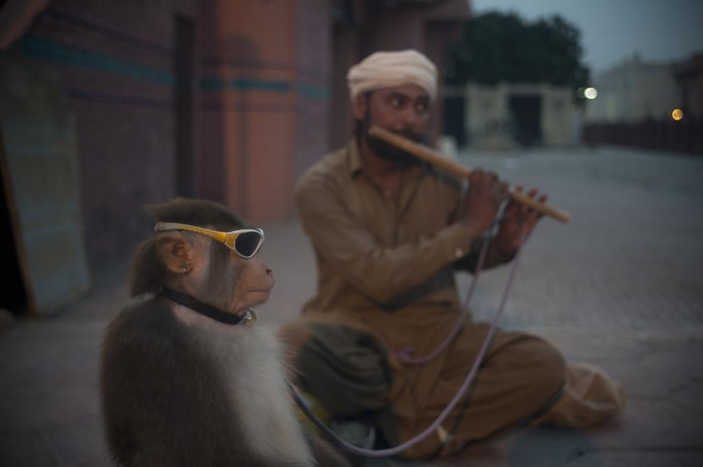 Naseer Khan, a Pakistani monkey handler, plays the flute Monday to attract passers by for a monkey show to earn his living in Islamabad. (AP Photo/B.K. Bangash)