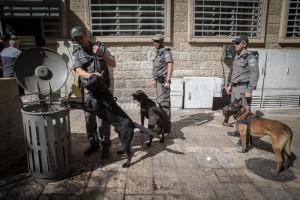 Israeli border police of the K9 unit patrol on Ben Yehuda Street in central Yerushalyim, Thursday.  (Nati Shohat/Flash90)