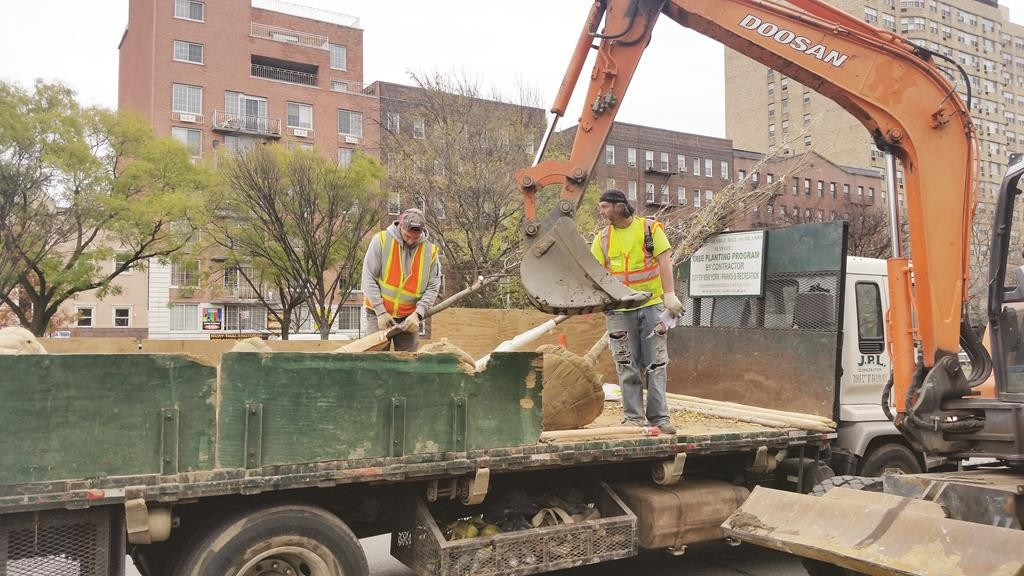 Workers on Wednesday plant trees along Ocean Parkway. (Hamodia Photo)