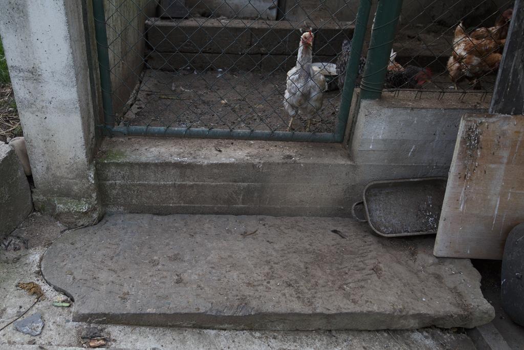 A matzeivah lies as a doorstep to a henhouse. (AP Photo/Petr Josek)