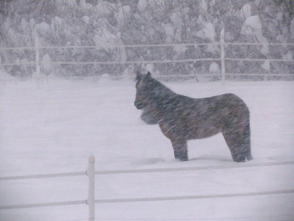 A horse stands in the snow in San Ignacio, N.M., on Sunday. (AP Photo via Melody Perez)