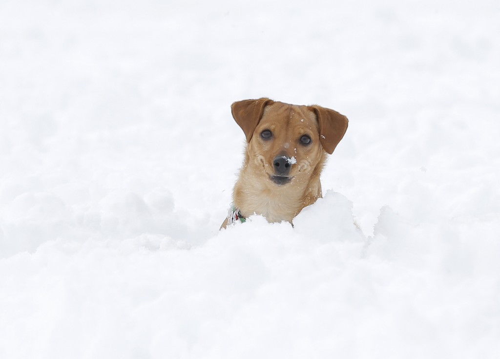 A dog plays in the snow at Madeline Park in El Paso, Texas, on Sunday. (Mark Lambie/The El Paso Times via AP)