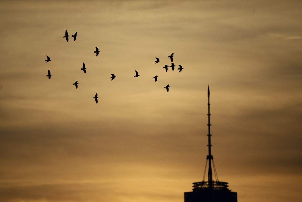 Birds fly in a colorful sunrise sky near the One World Trade Center tower seen from The Heights neighborhood of Jersey City, N.J., Friday, Dec. 11, 2015. (AP Photo/Julio Cortez)