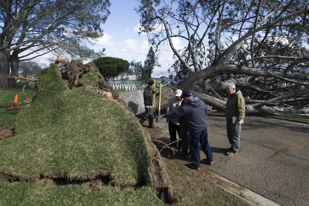 Workers remove a tree that fell due to a storm at Ft. Rosecrans National Cemetery in San Diego on Monday, Feb. 1, 2016. Powerful winds lashed Southern California on Monday at the tail end of a winter storm that also brought heavy rain and mountain snow. (John Gibbins/The San Diego Union-Tribune via AP) MANDATORY CREDIT